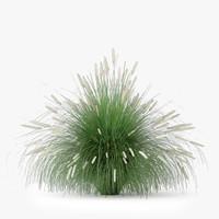 pennisetum alopecuroides max