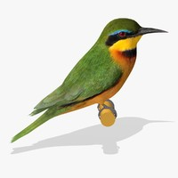3d little bee eater birds