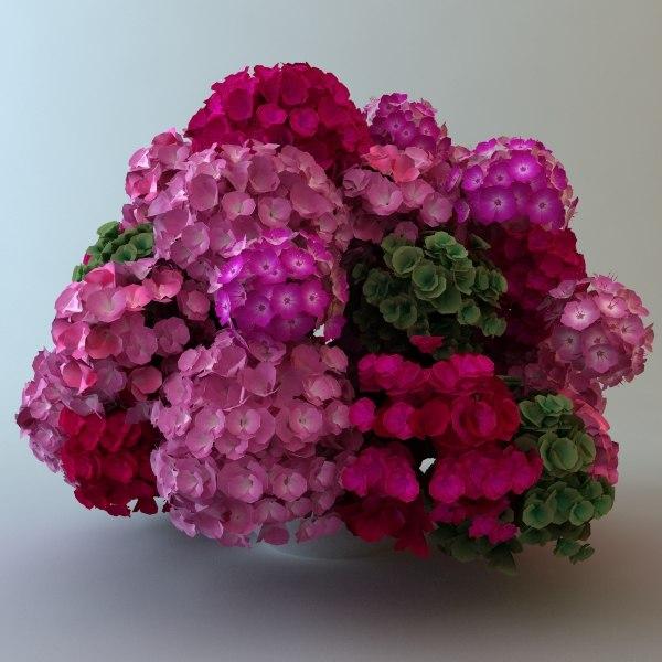 plantas-1.jpg