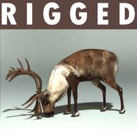 deer rein reindeer 3d model