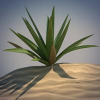 desert spikeplant 3d obj