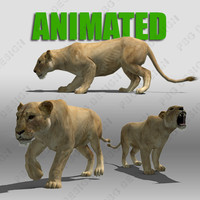 Lioness Animated