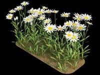 3d matricaria camomile chamomile