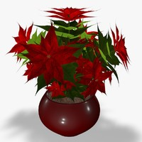 3d model poinsettia flower