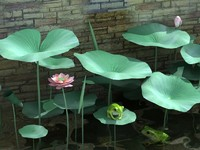 Frog In The Lotus Pond