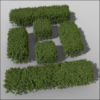 Box hedge Height 50cm