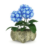 Blue Flower in Stone Pot