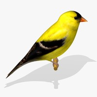 3d american goldfinch birds ab