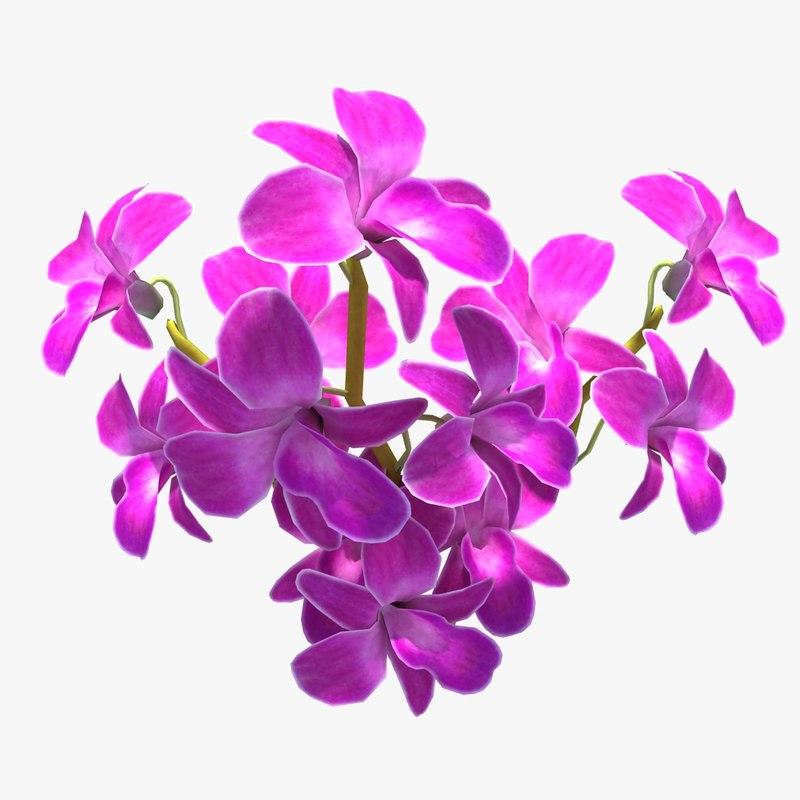 OrchidFlower_01.jpg