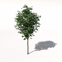 3d trees bushes landscaping
