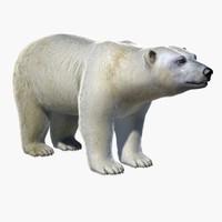 3dsmax polar bear