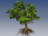 3d artificial maple tree