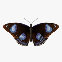 decorative butterfly fg 3ds