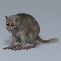 hair tarsiers c4d