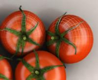 tomato 3d ma