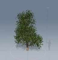 3ds max southern tree trunk