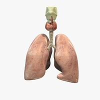 lungs anatomy 3ds