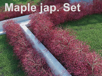 3ds max japanese maple set