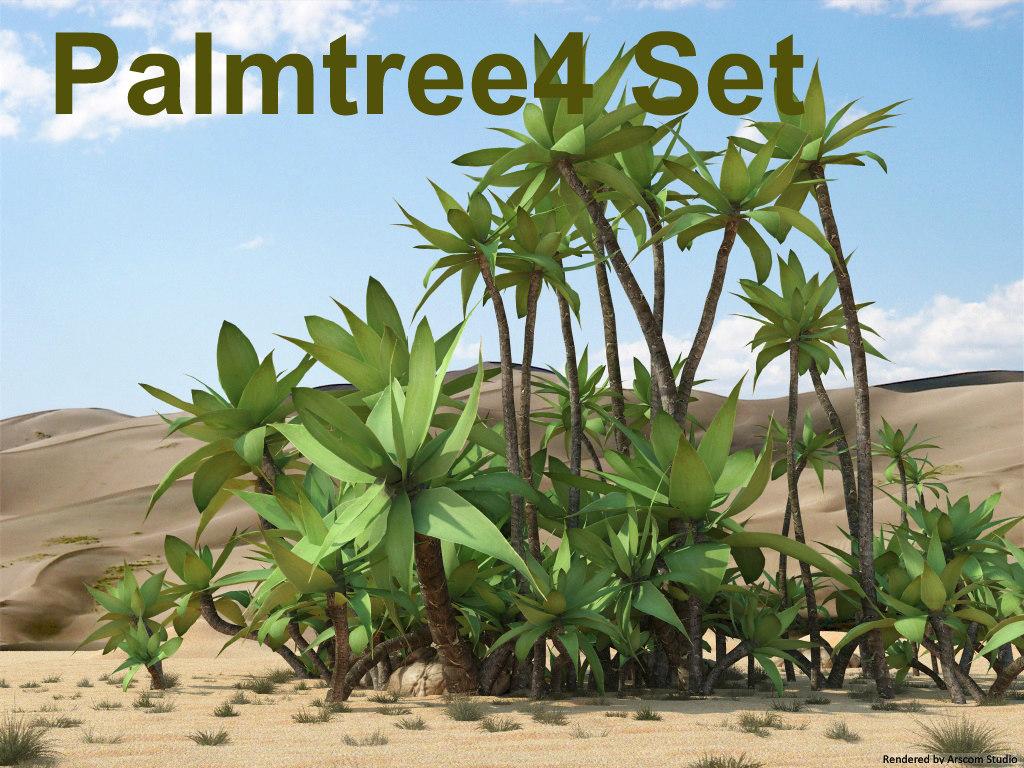 Palmtree 4_1.jpg