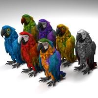 3d parrot species model
