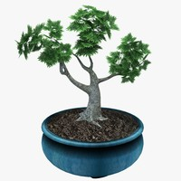 3d model potted bonsai tree