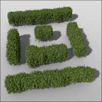 c4d box hedges height 50cm