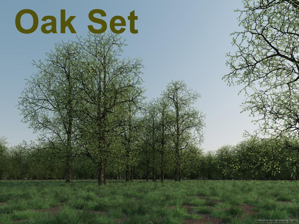 Oak1.jpg