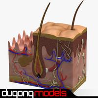 3d max dugm01 dermis anatomy