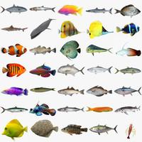 Fish Megapack