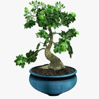 3d potted bonsai tree
