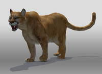 Mountain Lion(1)