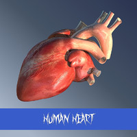 human heart man 3ds
