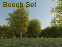 beech tree set 3d model