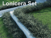 Lonicera Set
