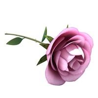 3d model white rose