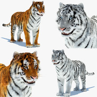 3d model tigers amur