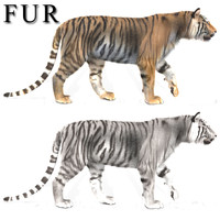 3d professional cgi tiger fur model