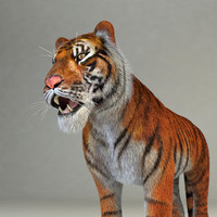 realistical tiger rigged 3d model