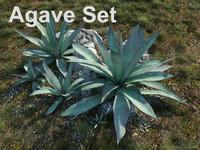agave set 3d model