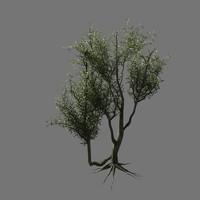 3dsmax hq olive trees