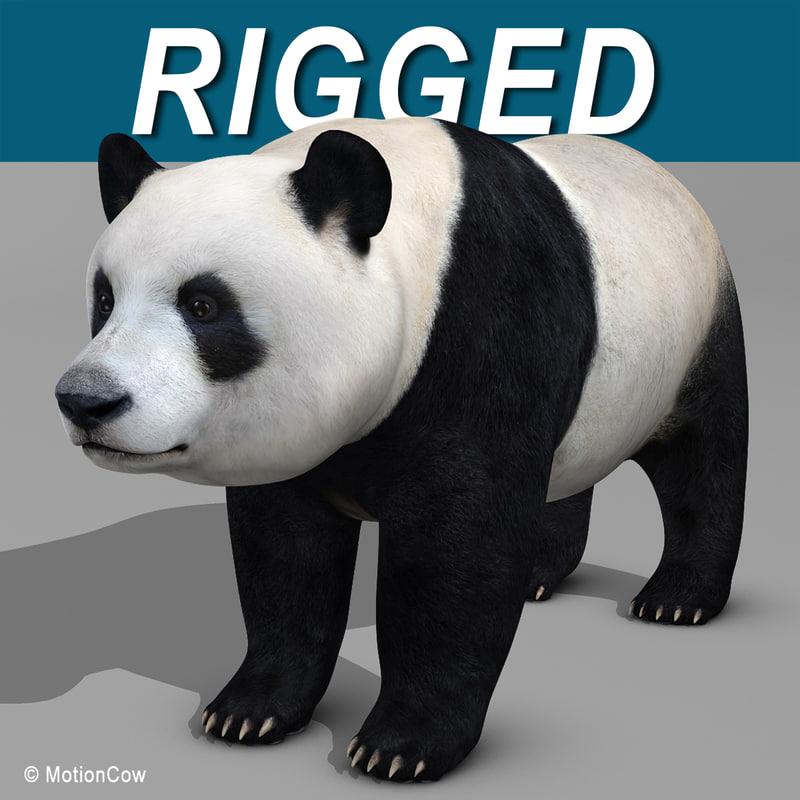 Panda_Bear_AA.jpg