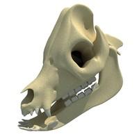 3d pig skull skeleton model