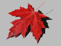 3ds maple leaf