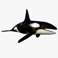 orca whale 3d max