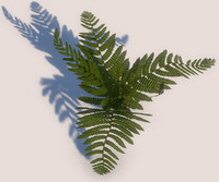 Game-ready Fern
