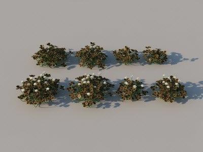 bronze-clover-01.jpg