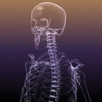 human skeleton x-ray scan 3d max
