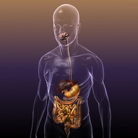 Digestive System IN A HUMAN BODY collection: mouth, teeth, throat, esophagus, stomach, gallblader, liver, duodenum, pancreas, spleen, hepatic flexure, acending, sigmoid and decending colon, ileum, cecum, appendix, jejunum, small and large intestines rectum