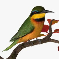 little bee eater birds 3d model