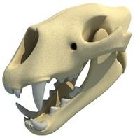 maya lion skull